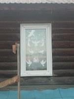 Жукова О.М.окно 2.jpg